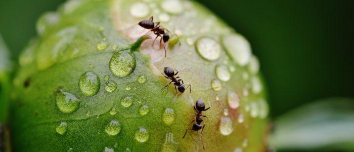 Ant Prevention Tips