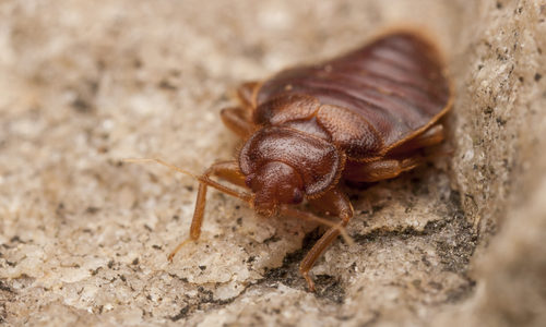 smarter bed bug treatment gregory pest solutions