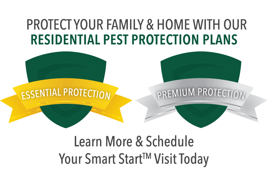 Residential Pest Protection Plans