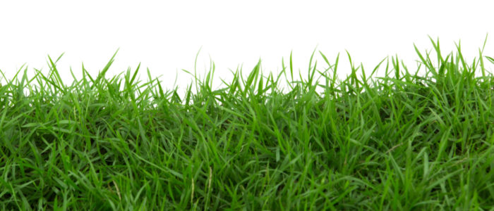 Close up of Grass on White Background