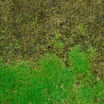 Diseased Grass with brown patches mixed with green patches