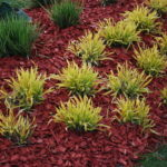 Red mulch surrounding plants