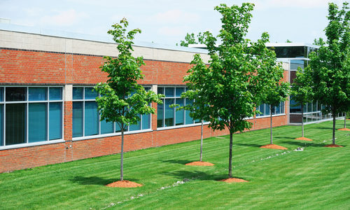 Trees Outside Commercial Office Building