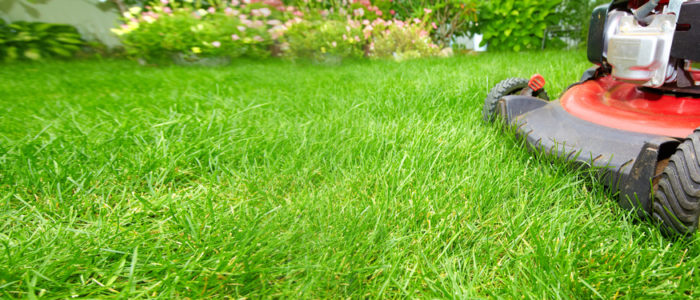 Wide Image of Lawn Mower in Grass