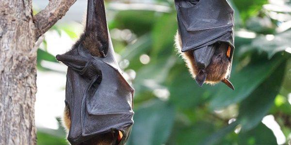 Bat Fun Facts