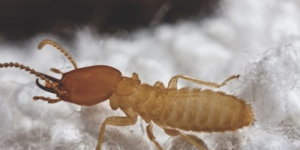 Three Types of Termites Found in South Carolina
