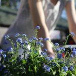 6 Tips to Get Your Upstate Yard Ready for Spring