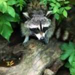 5 Tips to Safeguard Your Home from Wildlife