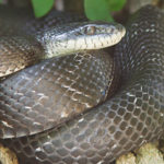 Snakes Come Out of Hiding as Summer Sets In