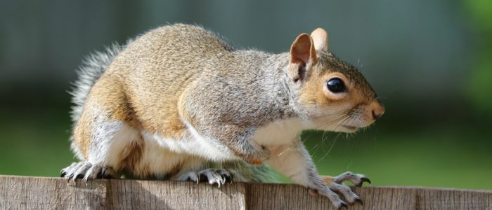 What You Should Know About Squirrels This Winter Gregory Pest
