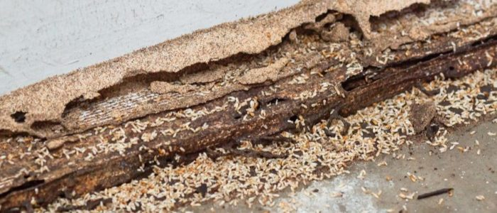 Lower baseboarding eaten away by termites