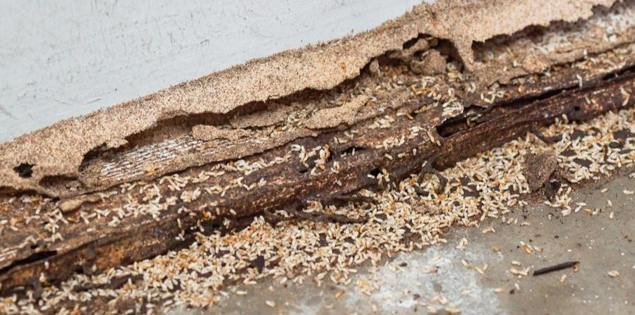 Commercial Termite Control Gregory Pest Solutions