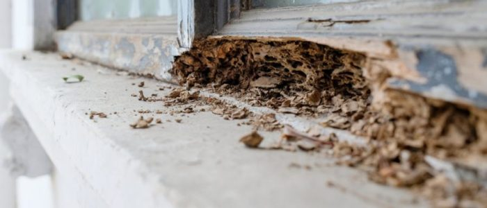 Termite Treatment How To Get Rid Of Termites Gregory Pest